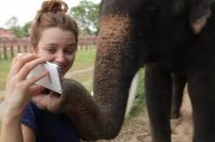 elefante gioca  smartphone galazy note